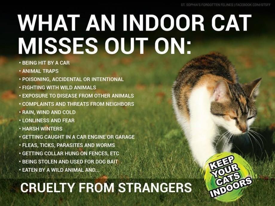 lov om kattehold